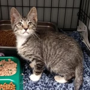 I was abanoned at the shelter and had a bit of an attitude when I first arrived but I quickly