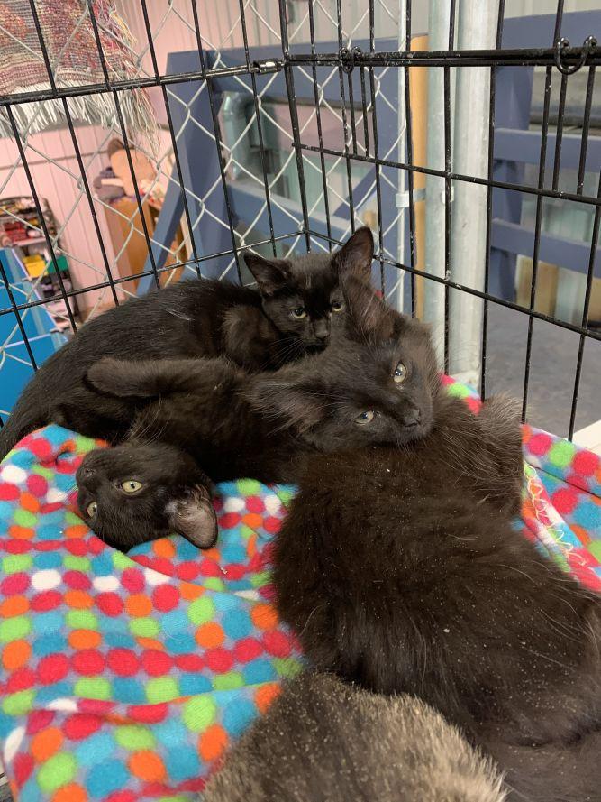 Deanne's kittens (st john)