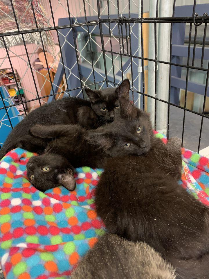 Deanne's kittens (st john) 1
