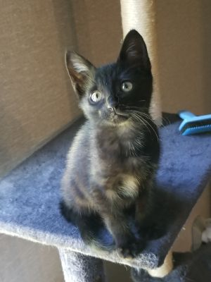 Hello my name is Skit My foster family named me that because I am just a little bit skittish Can