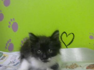 Tiny but mighty Thor is in foster care Email BARCFosterhoustontxgov to meet