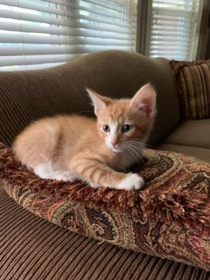 Hello world My name is Rascal Im about 5 12 weeks old I was found by a nice family that
