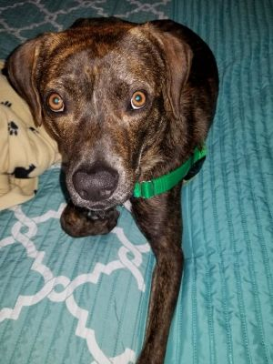 Stark is living in a foster home Submit an application from our website and the