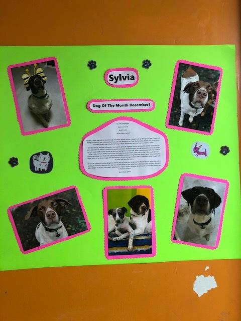 Sylvia - Overlooked Adoptable/Reduced Adoption Fee 6