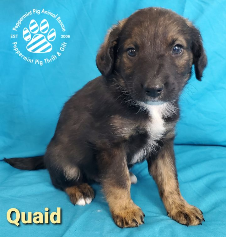 Quaid ADOPTION PENDING 2
