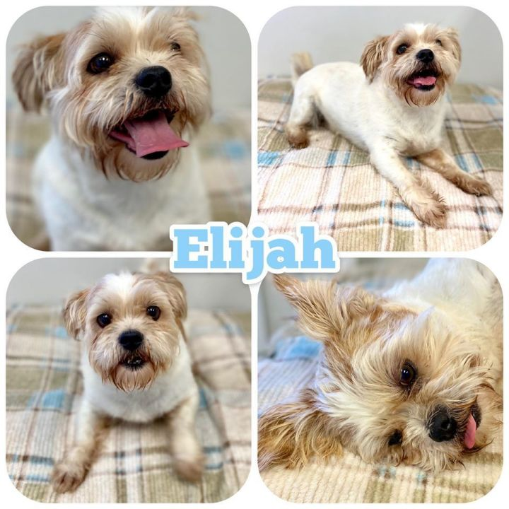 Elija, an adopted Mixed Breed in Cartersville, GA