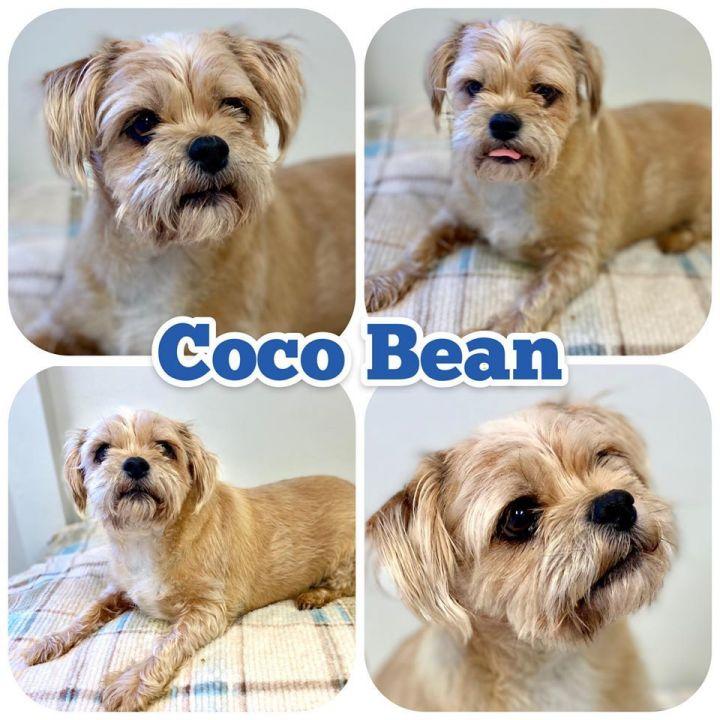 Cocoa Bean 1
