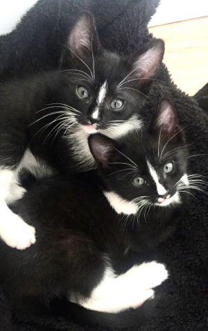 Binx & Ozzie (bonded)