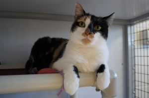 Dr Quinn is a four year old calico cat who was found as a pregnant stray in need of a