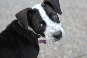 Mr Kodie is a high energy active pup He would love an active family that can