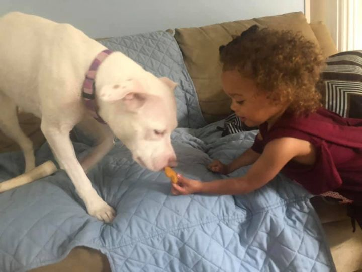 Coco, an adopted American Staffordshire Terrier in Long Beach, NY