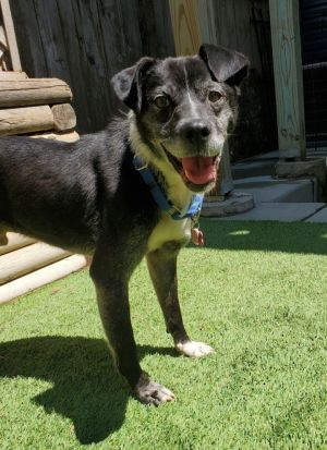 Odin is a charming and distinguished senior gentleman looking for a loving home