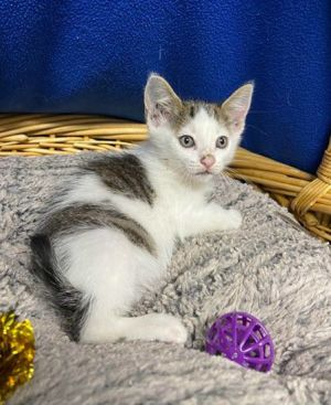 Corn Flower 41373 was picked up on the side of the highway along with his litter He is a little