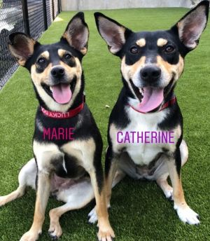 TO APPLY GO TO wwwLuckyDogRefugecom Bonded duo Must be adopted together This mother-daughter a