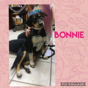 Bonnie is only 5 months old and weighs 20 pound She is a sweet pup with lots of potential If