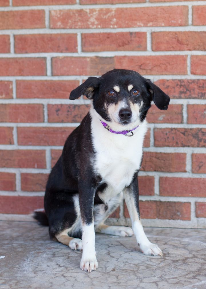JOEY, an adoptable Mixed Breed in Cape Girardeau, MO