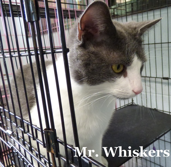 Mr. Whiskers 4