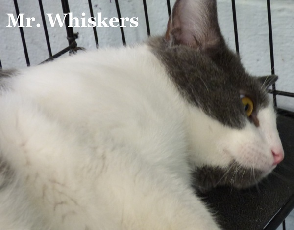 Mr. Whiskers 6