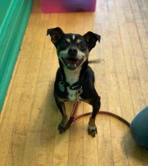 Meet Dino Dino came to the Animal Care League originally as a young pup over 7