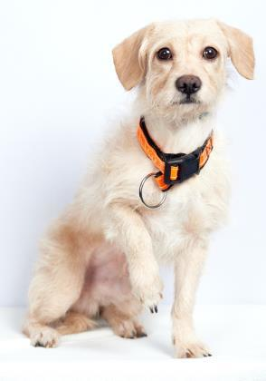 If you are interested in meeting this pet please visit our website to check on