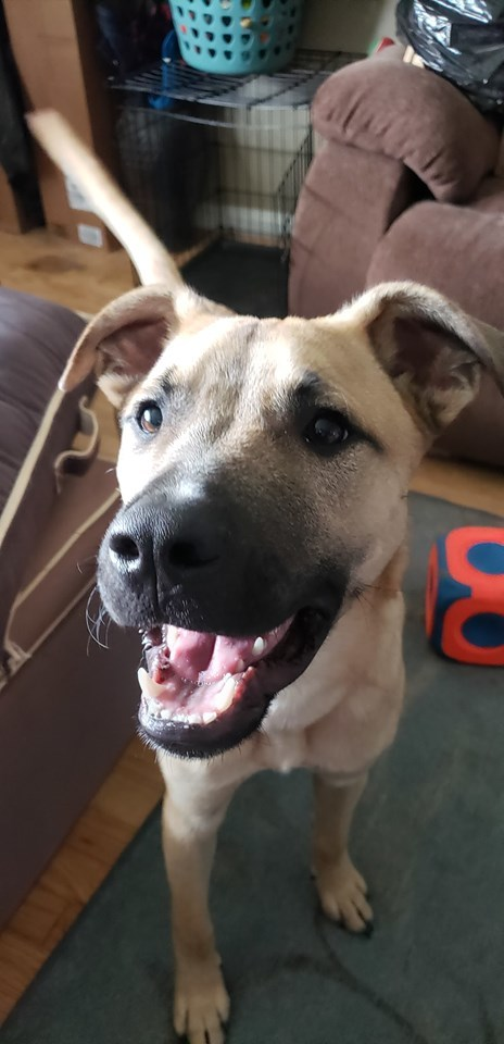 Jackson, an adopted Mixed Breed in Millersville, MD