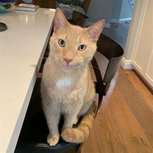 ?bust=1595435231&width=300 - Adopt a Cat