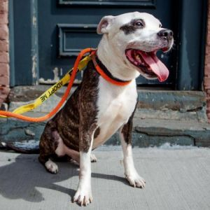 Rocky Earl is a sweet guy who loves to cuddle Rocky Earl has cancer but that doesnt stop him from