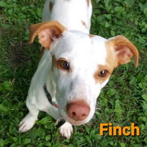 Finch ADOPTION PENDING