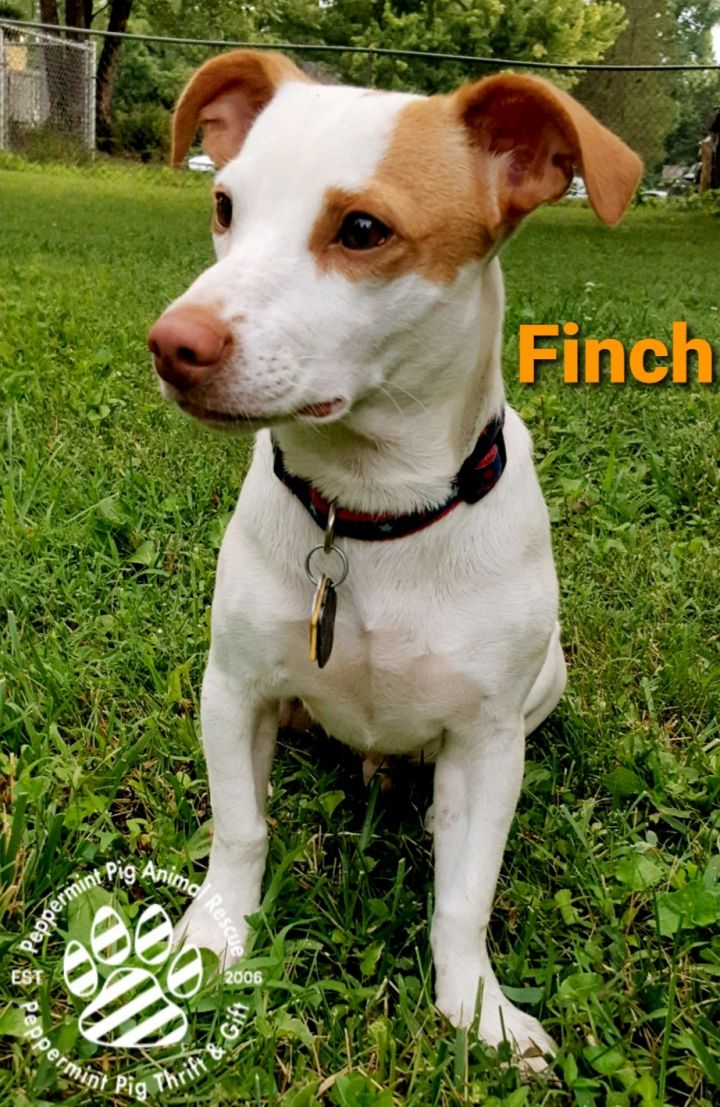 Finch ADOPTION PENDING 6