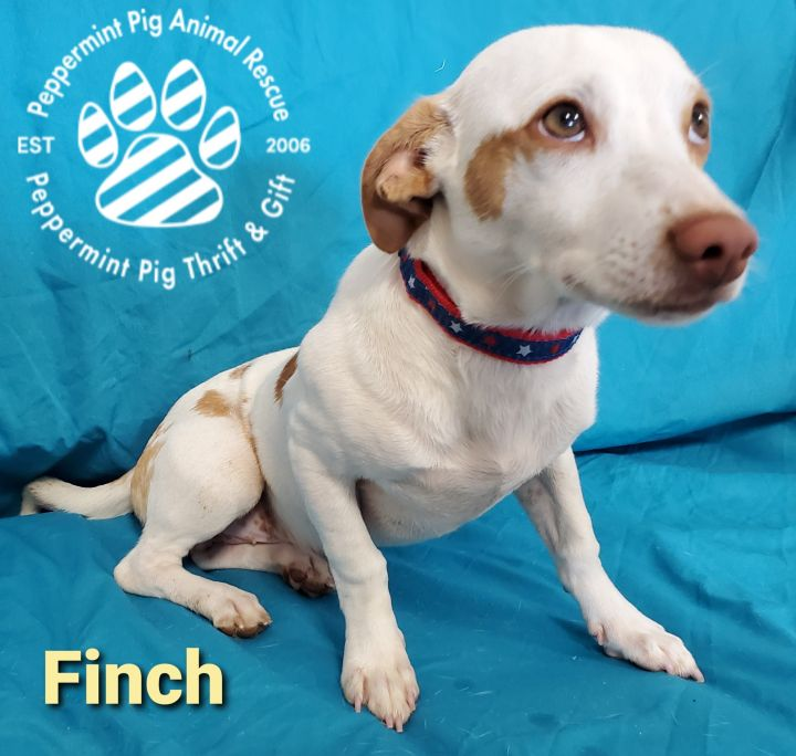 Finch ADOPTION PENDING 2