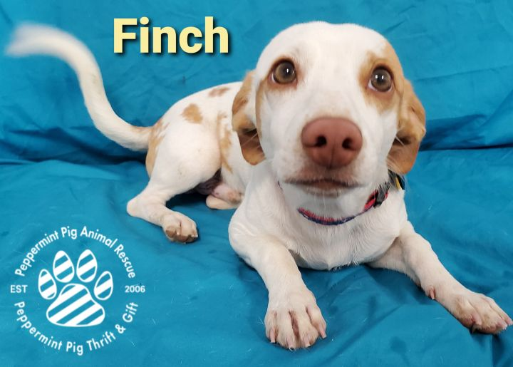 Finch ADOPTION PENDING 3