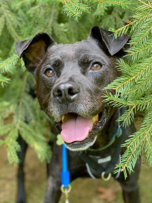This adorable guy is Grizzly This sweet boy is quite the little explorer he LOVES the outdoors and