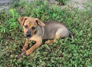 Barney - adoption pending!