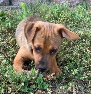 Barney - adoption pending! 2