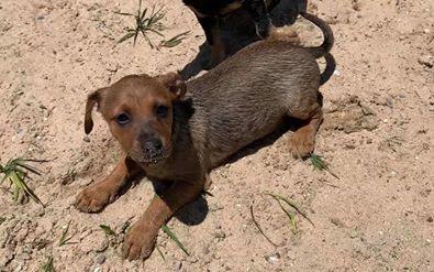 Barney - adoption pending! 3