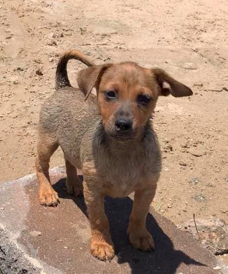 Barney - adoption pending! 4