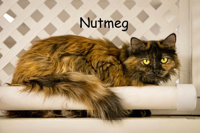 Nutmeg 4
