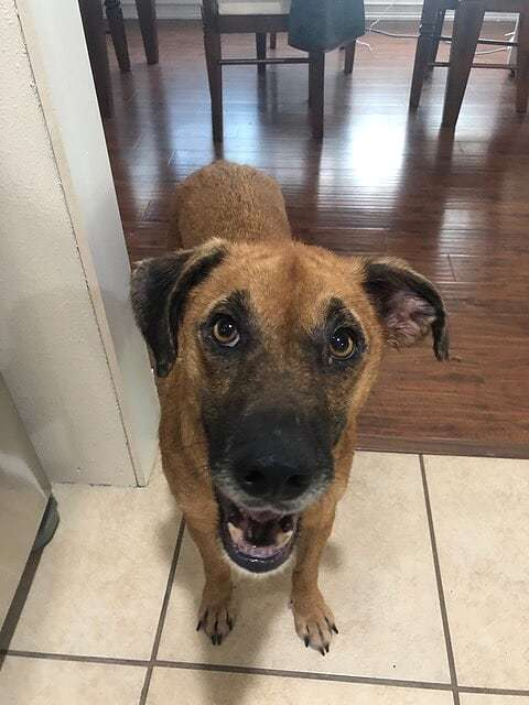 Yogi-Paws in Prison Particpant, an adoptable Mountain Cur Mix in Little Rock, AR