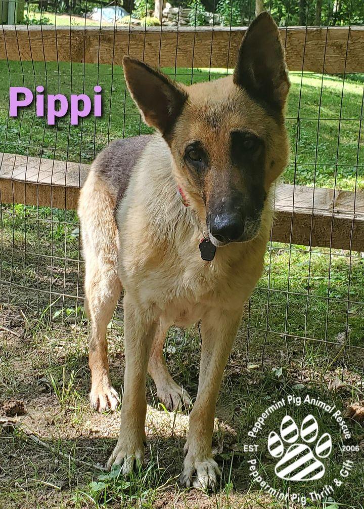 Pippi ADOPTION PENDING 2