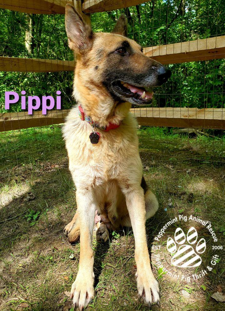 Pippi ADOPTION PENDING 4