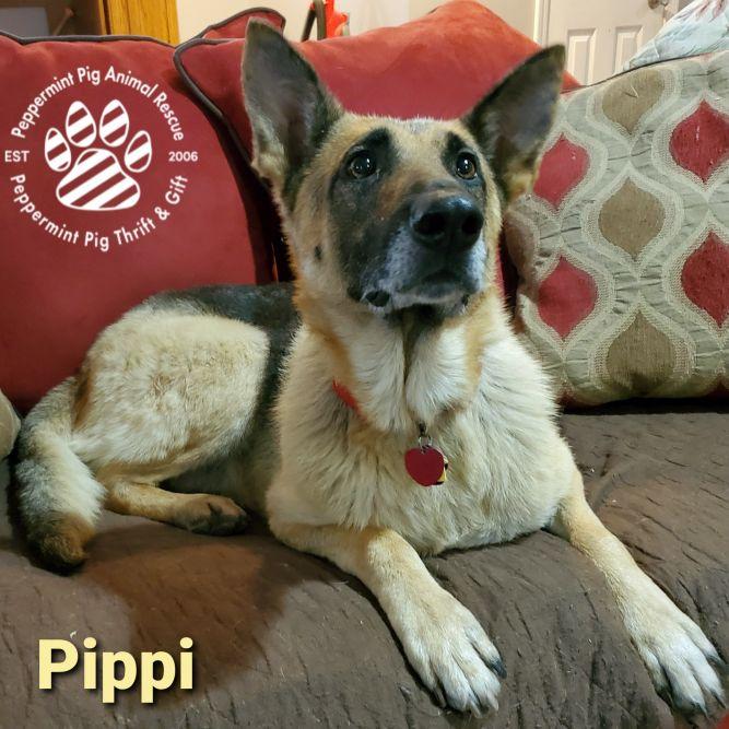 Pippi ADOPTION PENDING