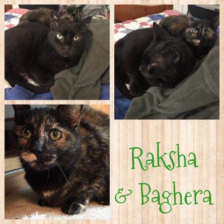 BAGHERA & RAKSHA 1