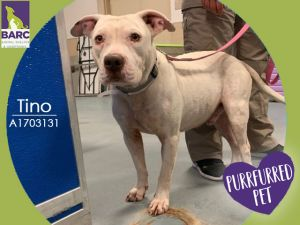 Tino looks very handome in his all white coat - he could be a doctor Tino is looking for a