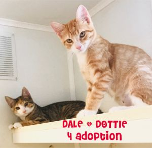 Dorothy and Dale were surrendered when their owner could no longer care for them and was going to pl