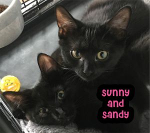Sunny  Sandy were found as young kittens living on the streets of NYC frightened and scared and wer
