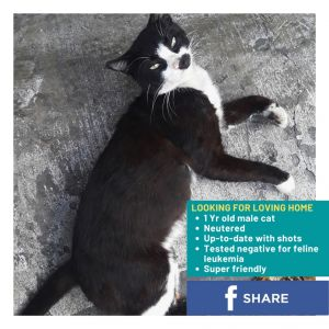 Sweet and playful loving boy dumped at an office building forced to fend for himself outside in the