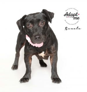 Hello My name is Renata or Rennie Im a seriously cute little nugget I am short and sweet and pe
