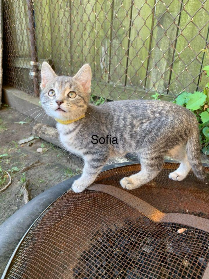 Bella and Sofia 3
