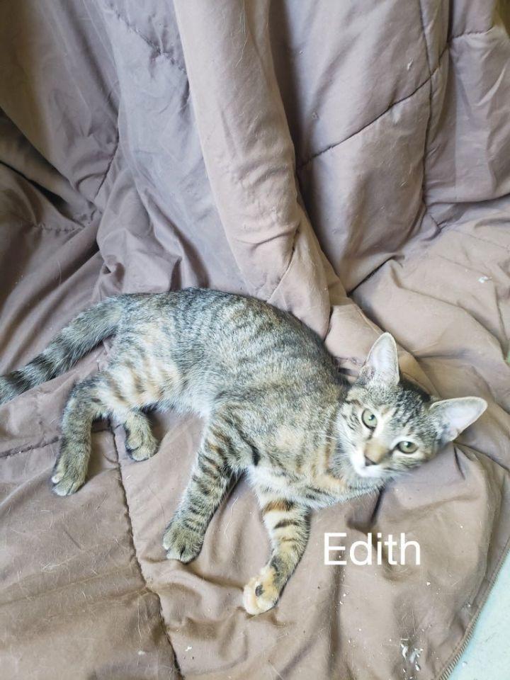 Edith 1