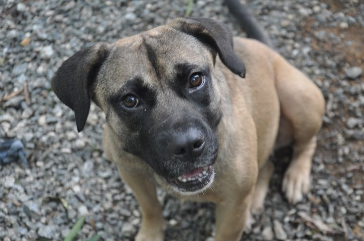 Peaches, an adopted Mixed Breed in Milledgeville, GA
